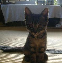 Cat_quri1