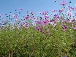 Flower_park2
