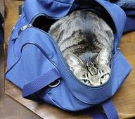 Cat_inabag