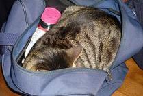 Cat_inabag2