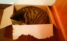 20080726_catinbox