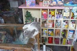 Mizukiroad_cat2