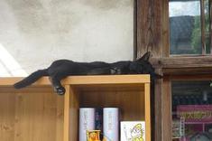Mizukiroad_cat4
