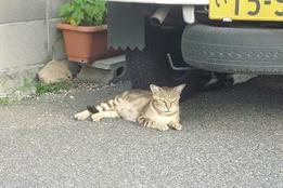 Mizukiroad_cat5