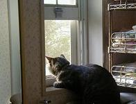 Cat_at_little_window2