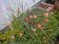 Gardenc