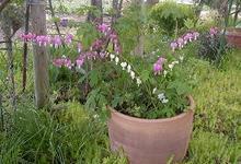 My_garden1