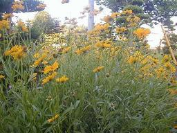 My_garden1_1