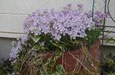 My_garden3