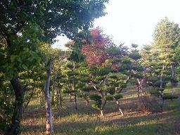 My_garden3_1