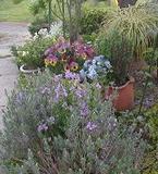 My_garden4