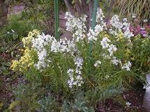 My_garden5