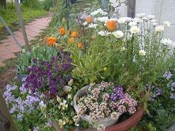 My_garden6