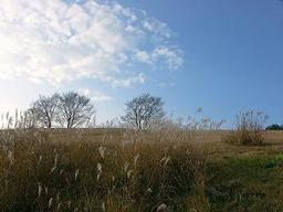 Sky_and_field