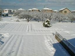 snowmorning1