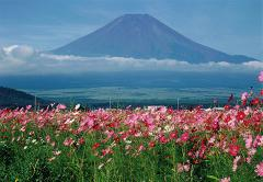 Free_picture_cosmos