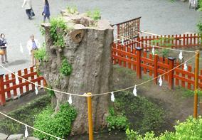 20100529_kamakura008