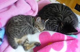 20101103_catandcat