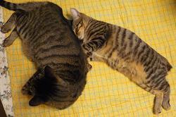 20101227_catandcat01
