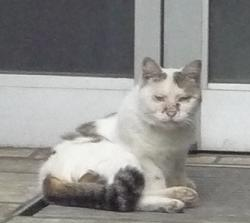20110612_cat01