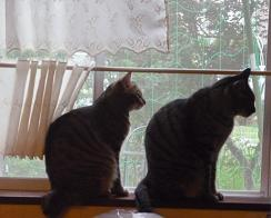 20110702_cats01