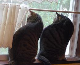 20110702_cats02