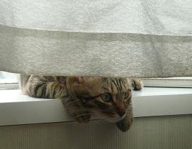 20110923_cat01