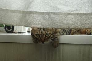 20110923_cat02