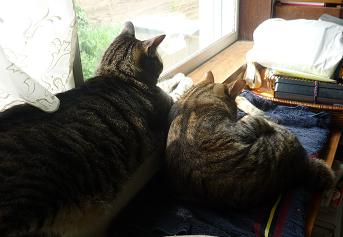 20120506_cats01
