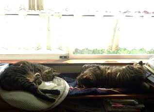 20120506_cats02