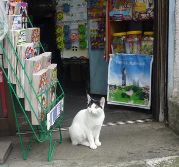 20121107_cats01
