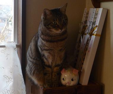 20130130_cat01