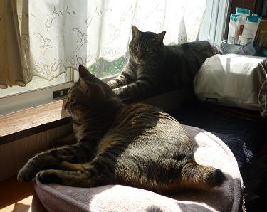 20130413_cats02