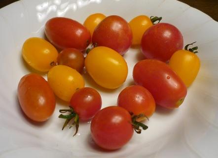 20130720_petit_tomato01