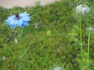 20140520_flower01