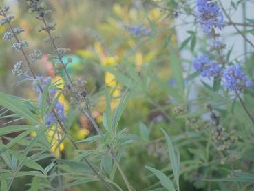 20140913_flower01