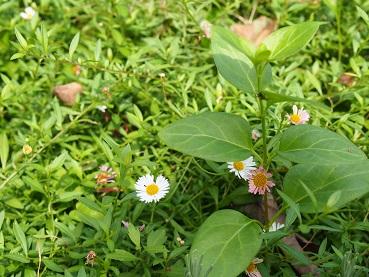 20141012_flower01