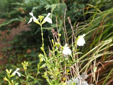20141012_flower02