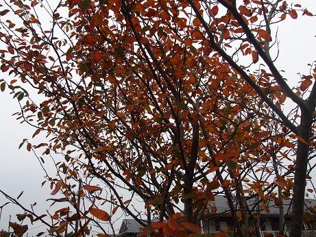 20141108_autumn_02