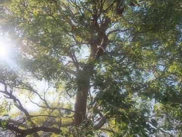20141228_tree01