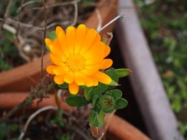20150322_flower005