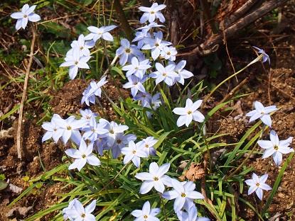 20150328_2_flower01