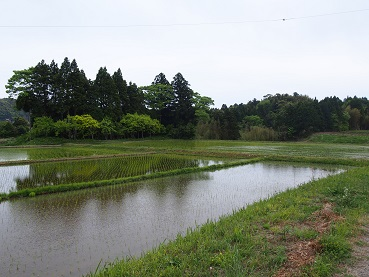 20150505_isumi_rail_010