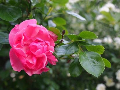 20150509_flowers002