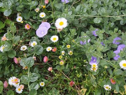 20150509_flowers003