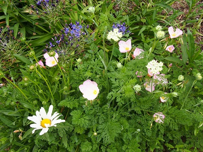 20150509_flowers007