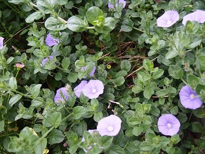 20150509_flowers009