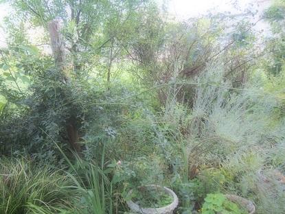 20160714_garden06