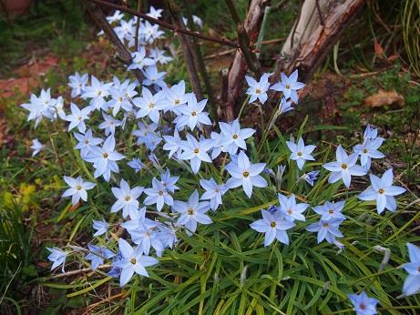 20170326_flower01