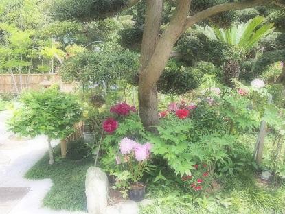 20170506_asahishi_garden001